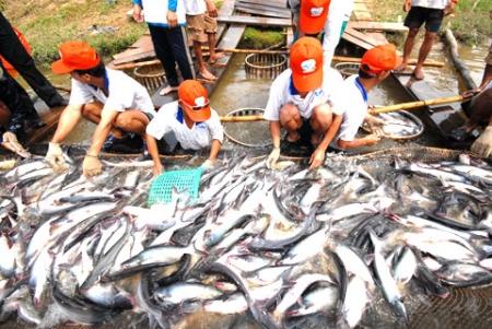 Sẽ tái cấp vốn để cứu cá tra
