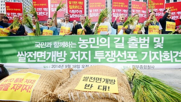 Hàn Quốc quyết định đánh thuế hơn 500% đối với gạo nhập khẩu