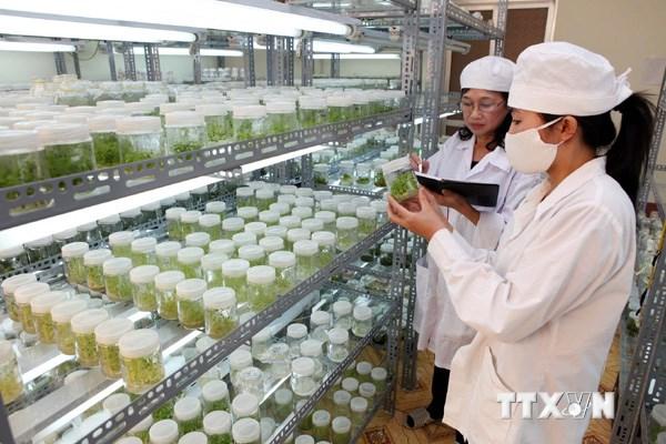 Tái cơ cấu nông nghiệp - Công nghệ là chìa khóa then chốt