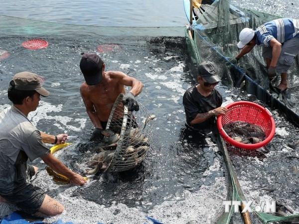 Sản lượng thủy hải sản của Bạc Liêu trong 9 tháng tăng 9%