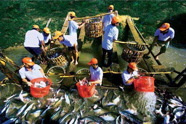 Cá tra chiếm 22% giá trị XK thủy sản của Việt Nam