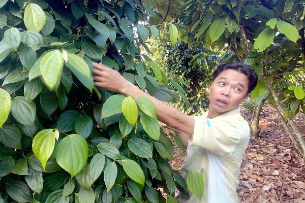 Doanh nghiệp kỳ vọng giá nông sản sẽ tăng