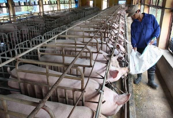 Nỗi lo của ngành chăn nuôi