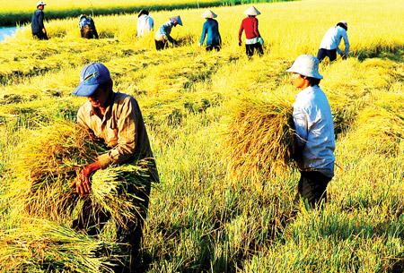 Tầm nhìn mới của ngành nông nghiệp